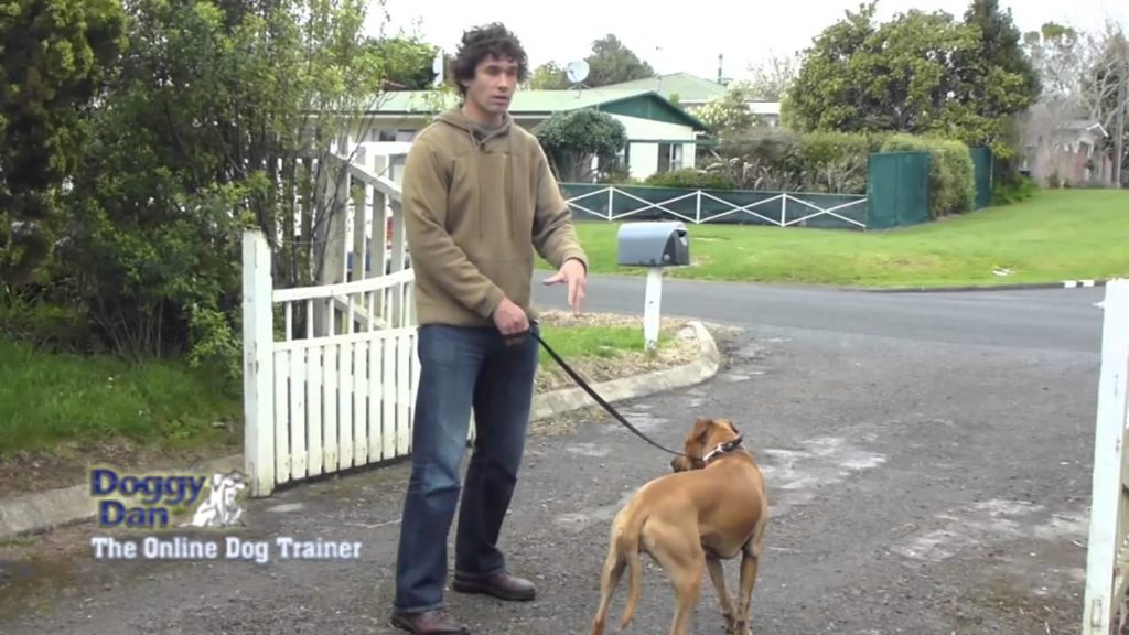 Training your dog to walk on leash