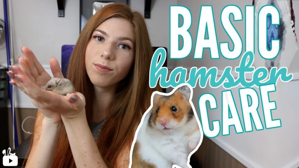 BASIC HAMSTER CARE | All about hamsters! ?