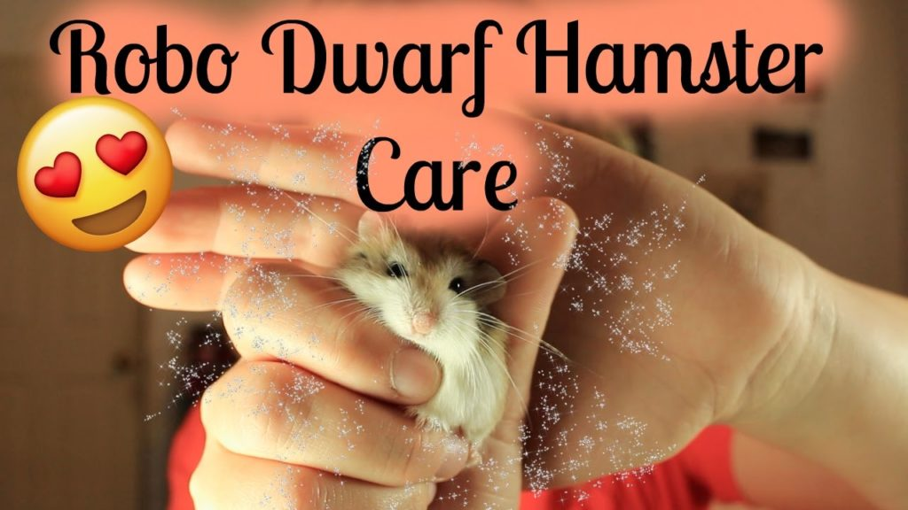 HOW TO CARE FOR A ROBO DWARF HAMSTER/ WHAT YOU NEED