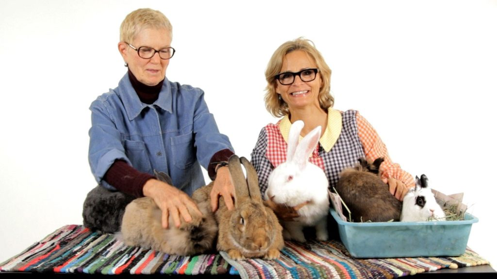 Which Rabbit Breed Is Best? | Pet Rabbits