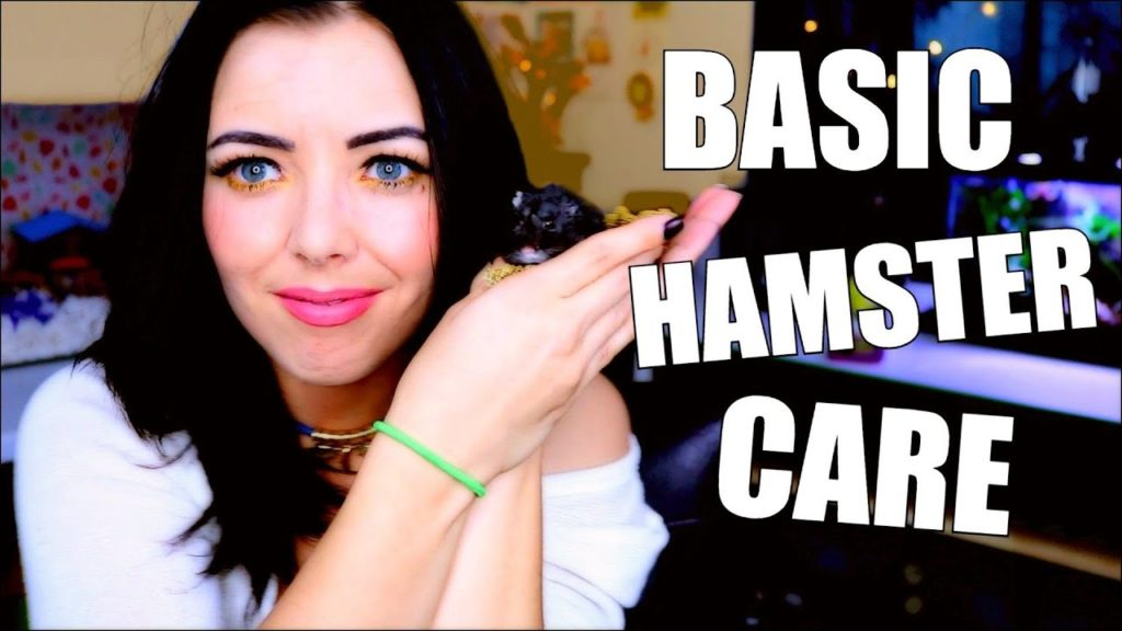 BASIC HAMSTER CARE | HAMSTER CARE GUIDE