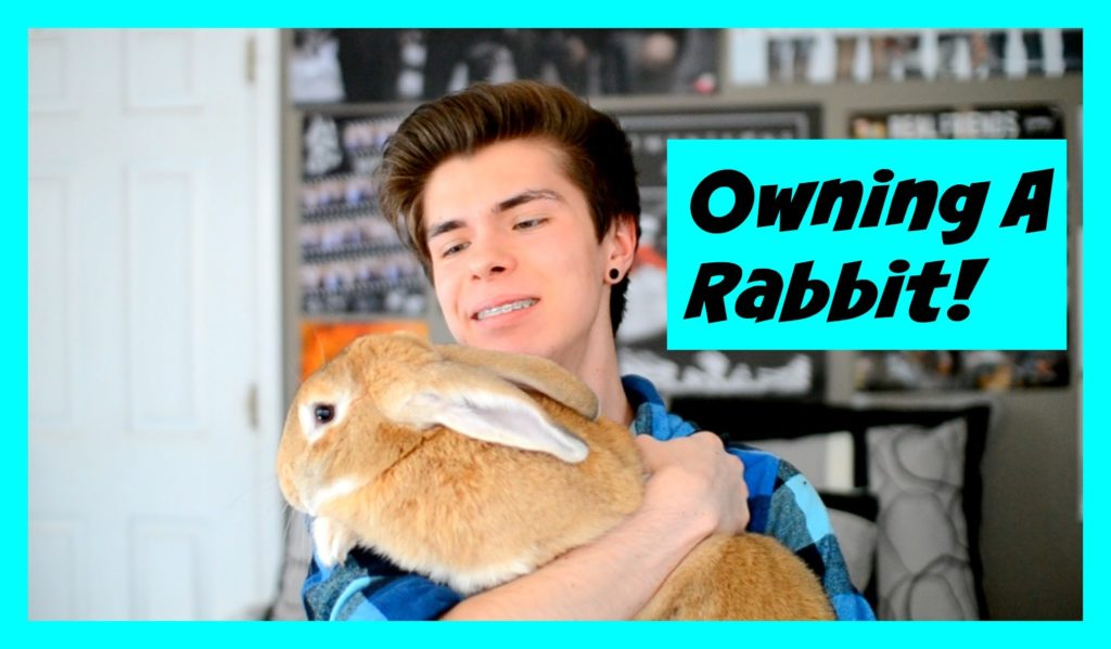 WATCH THIS BEFORE GETTING A PET RABBIT!