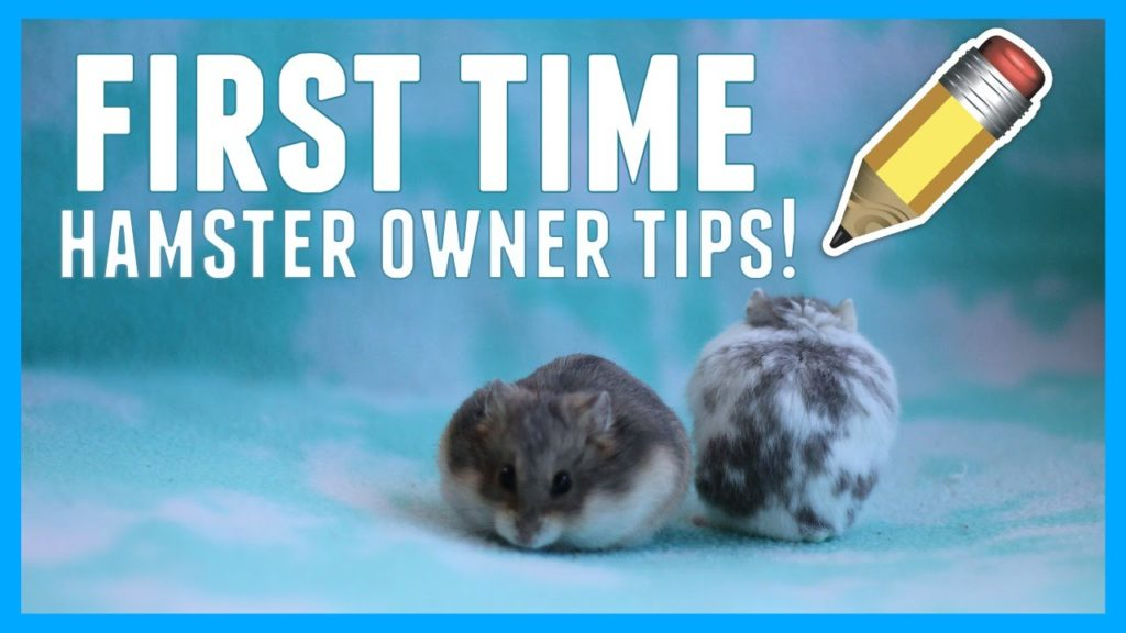FIRST TIME HAMSTER OWNER TIPS!