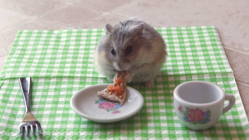 Tiny dwarf hamster eating a tiny pizza