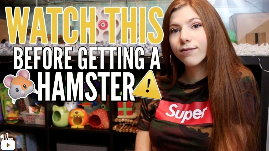 WATCH THIS BEFORE GETTING A HAMSTER ?⚠️