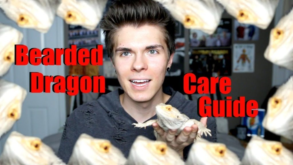 Bearded Dragon Care Guide! *everything you need to know*