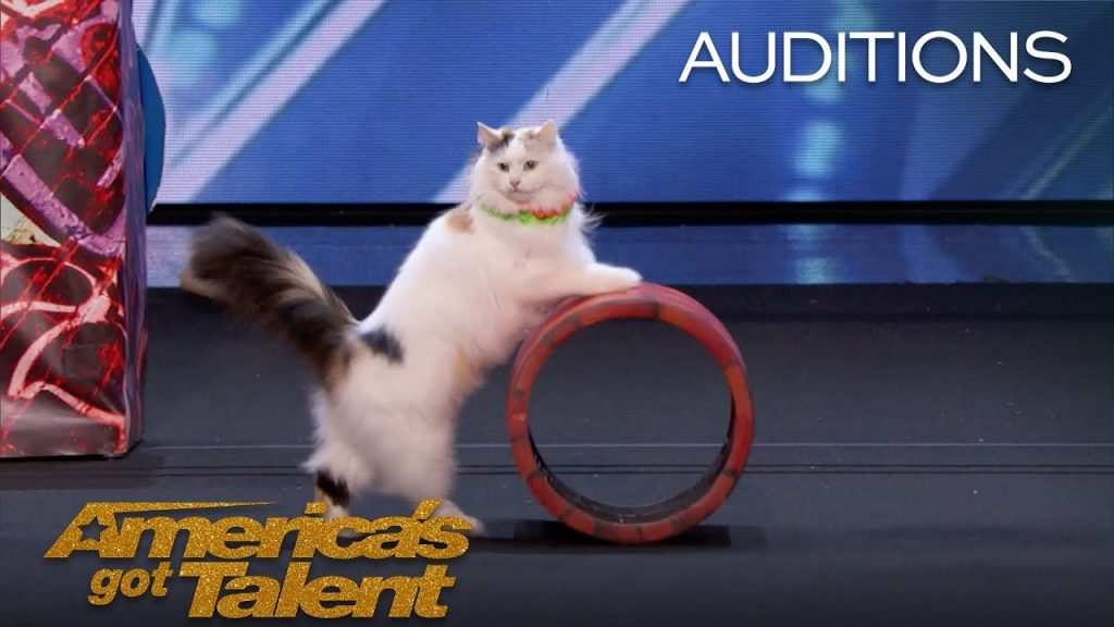 The Savitsky Cats: Super Trained Cats Perform Exciting Routine – America's Got Talent 2018
