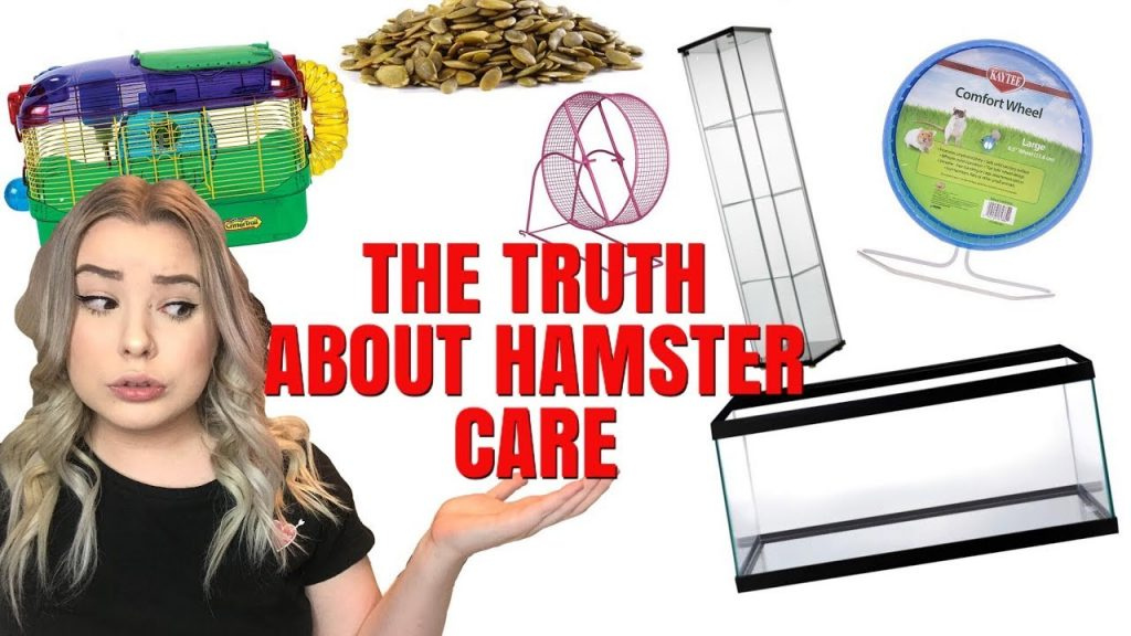 THE TRUTH ABOUT HAMSTER CARE + HAMSTER MISCONCEPTIONS!