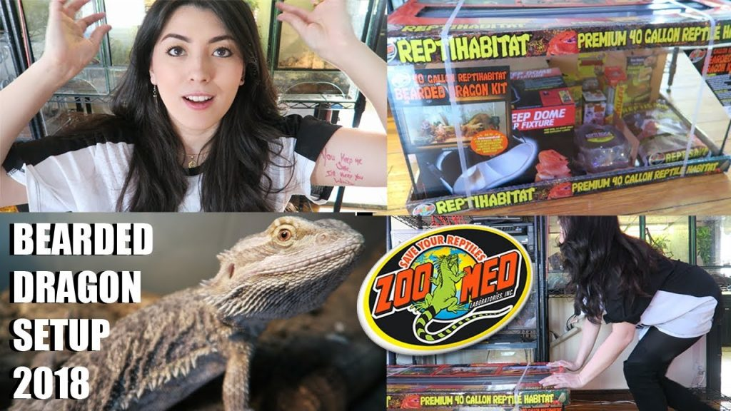 NEW Bearded Dragon Setup! | How To Set Up A Bearded Dragon 2018 | Zoo Med
