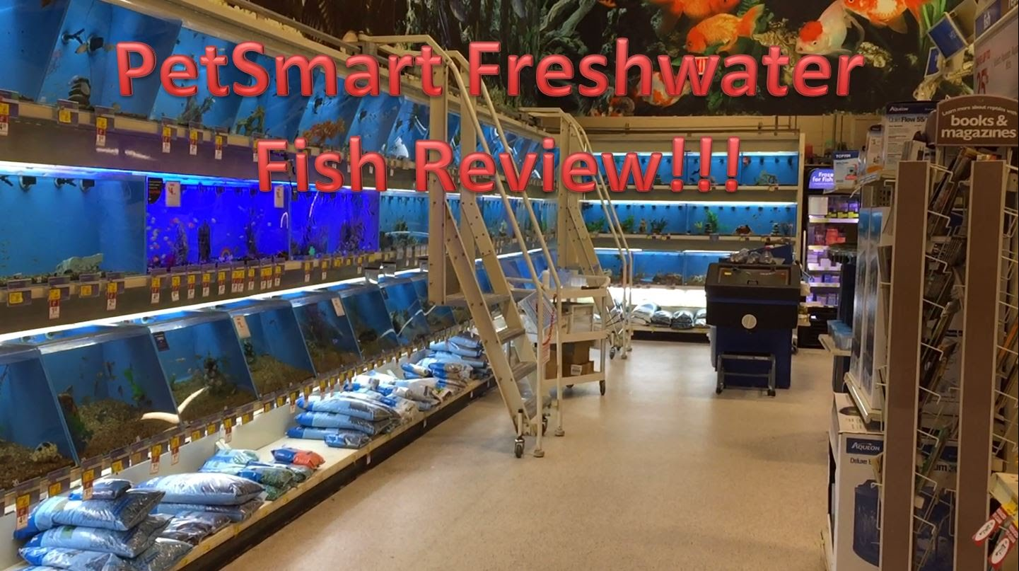 PetSmart Freshwater Fish Review - Pet Site - How to care for your pet