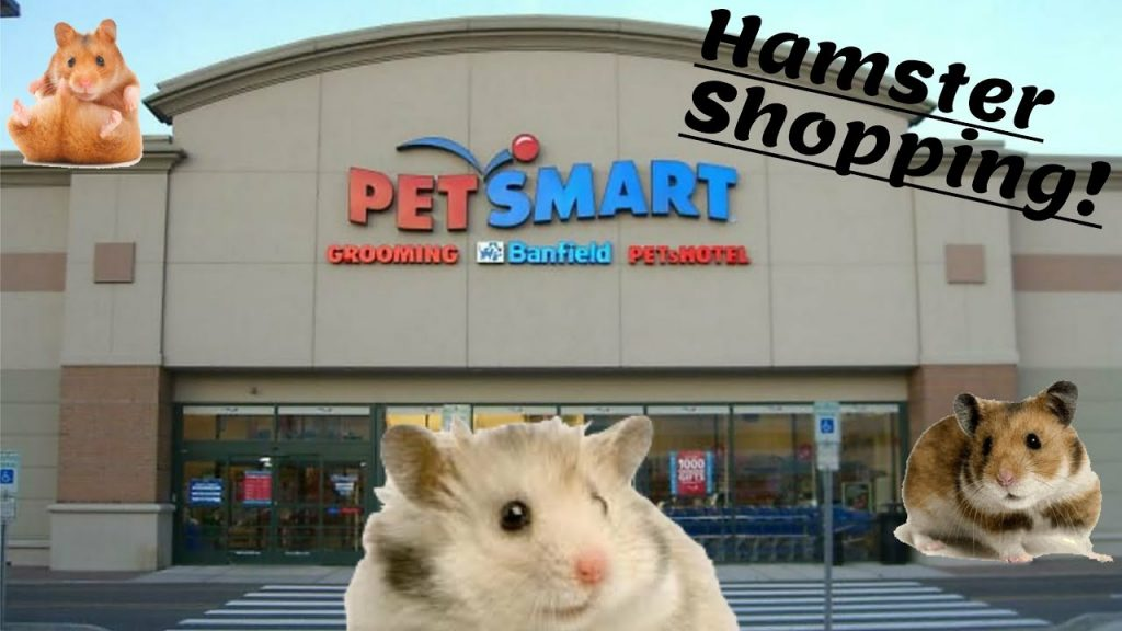 GETTING 2 NEW HAMSTERS AT PETSMART! (SHOPPING FOR DWARF HAMSTERS AND HAMSTER STUFF)