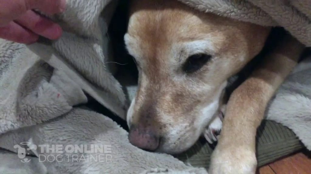 Where should my dog sleep?