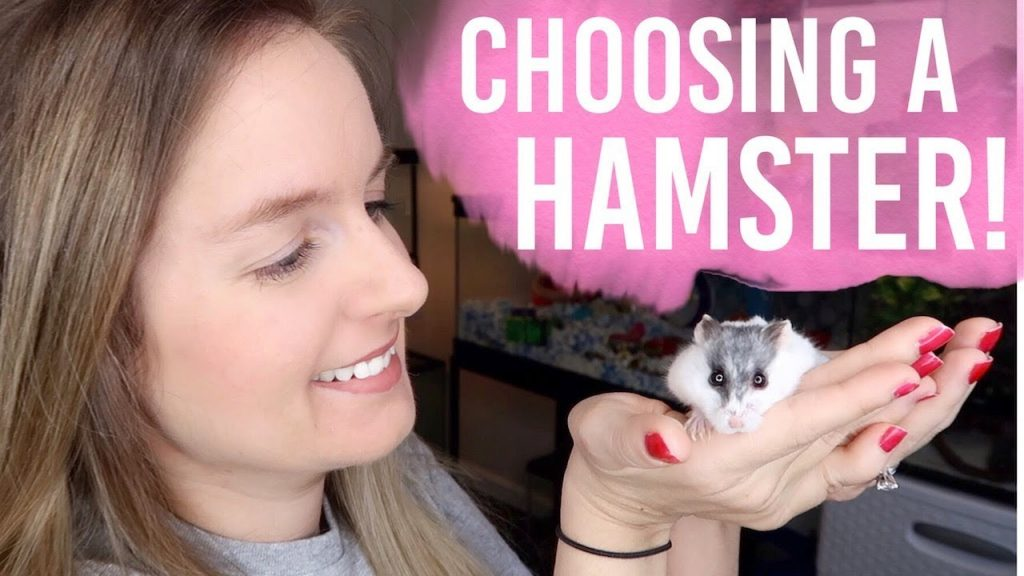 How To Choose A Hamster | Dwarf or Syrian?