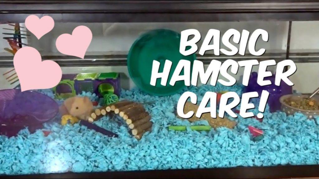 BASIC HAMSTER CARE!