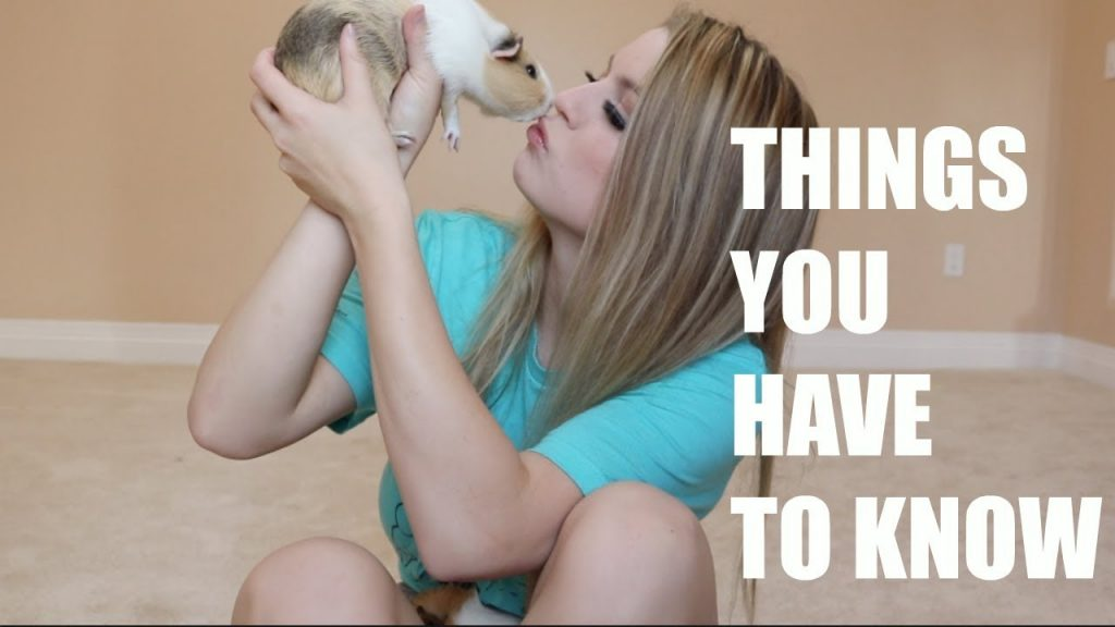 10 THINGS YOU NEED TO KNOW BEFORE GETTING A GUINEA PIG