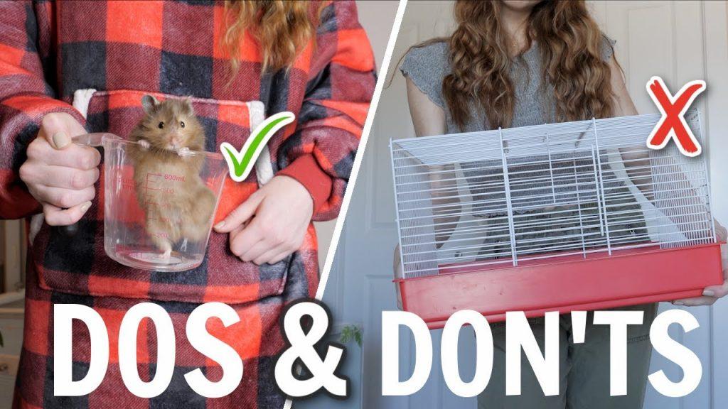 Hamster Dos & Don'ts