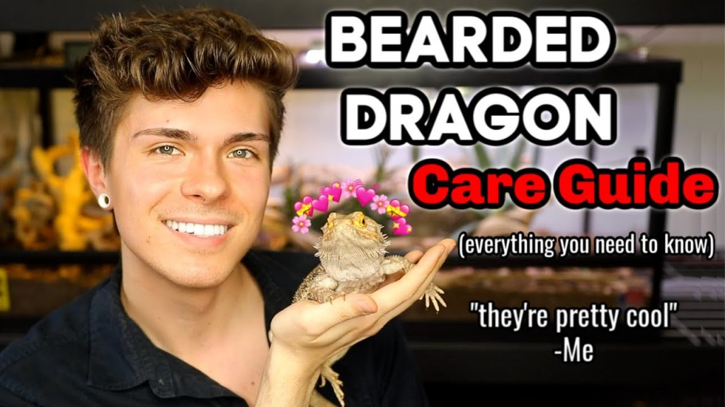 Bearded Dragon Care Guide! (EVERYTHING you need to know)