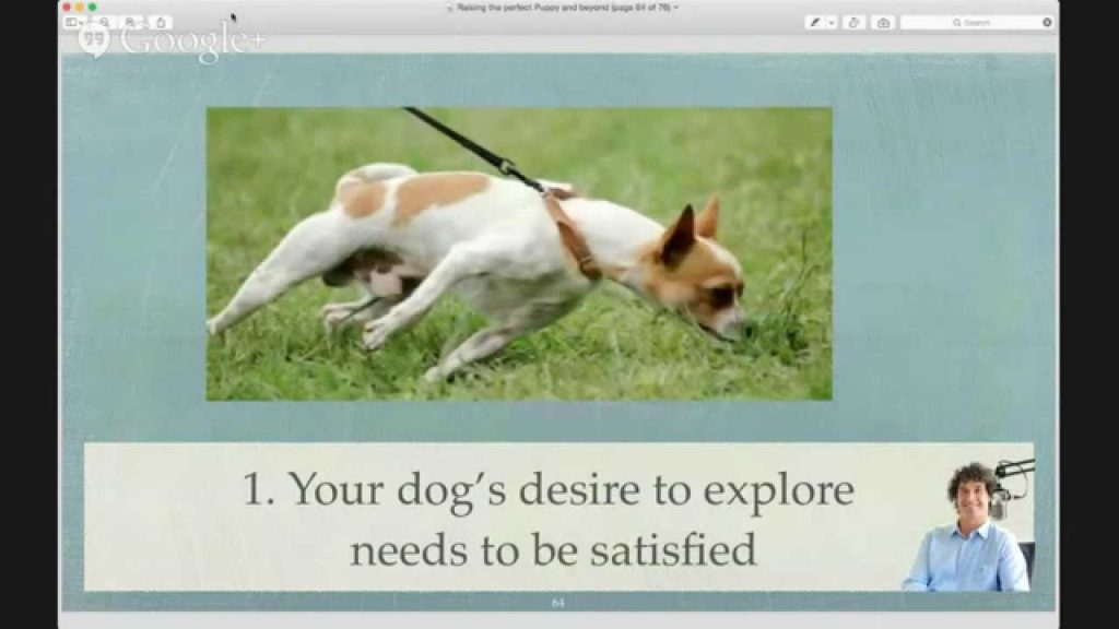 [Live Webinar] Raising the Perfect Puppy and Beyond…