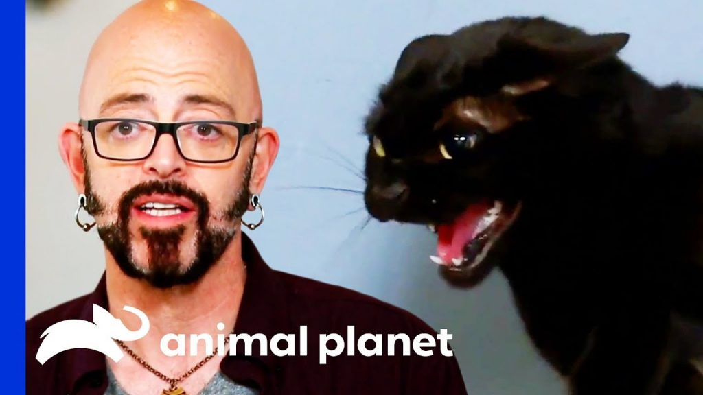 These Cats Need Serious Help With Their Anger Management! | My Cat From Hell