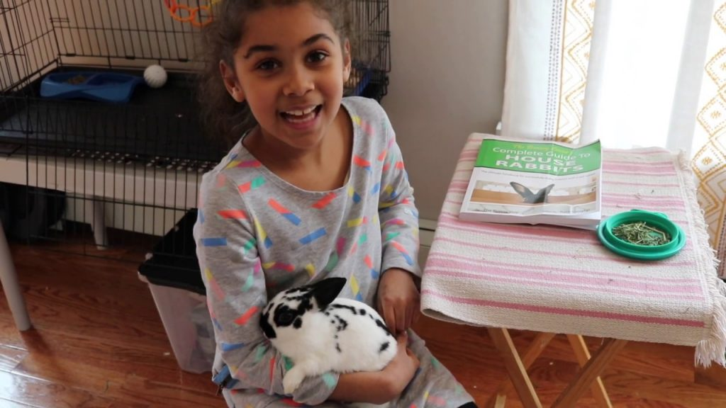 How I take Care of My Pet Rabbit: Routine and Care