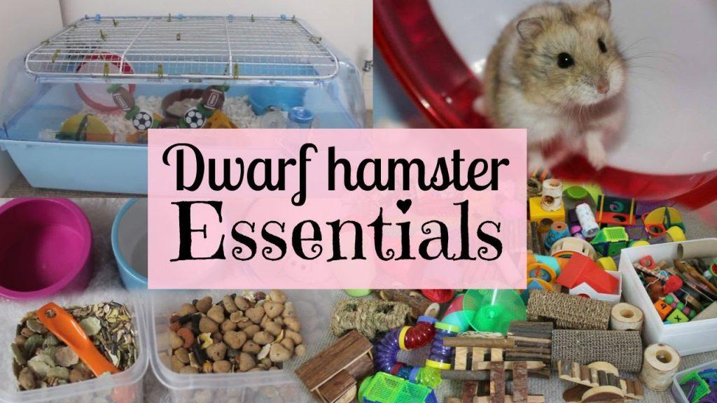 Dwarf Hamster Essentials