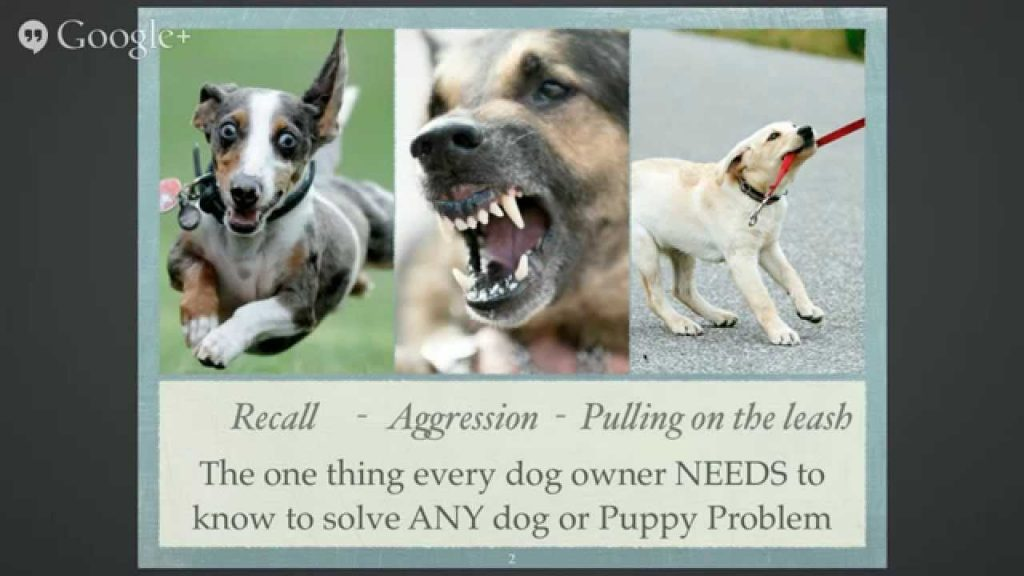 [Live Webinar] The one thing every owner MUST know to solve any dog or puppy problem.