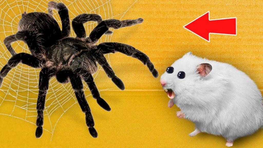 🕷Spider – Hamster Maze with Traps 💀 [OBSTACLE COURSE]