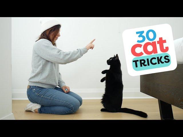 30 Tricks To Teach Your Cat